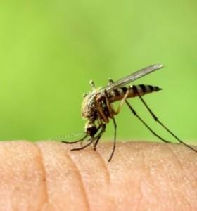Продължава третирането против комари