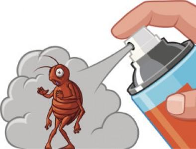 Основни правила при използване на инсектициди в домашни условия