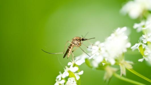 Допълнителни обработки срещу комари
