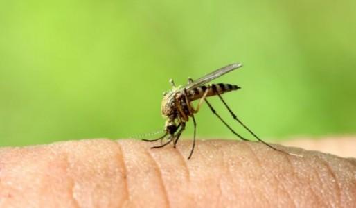 Започнаха превантивните обработки срещу ларви на комари